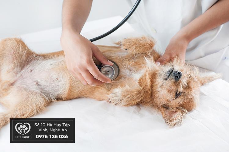 Dịch vụ khám va chữa bệnh cho chó mèo